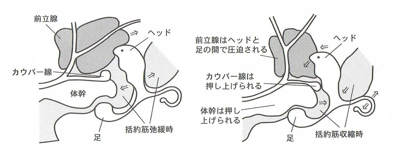 エネマグラの取説図